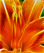 Orange Tiger Lily Prints - Flower - Orange - Abstract Print by Paul Ward