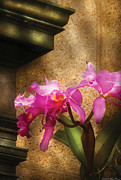 Flower - Orchid - Cattleya  Print by Mike Savad