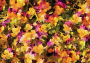 Pansies Prints - Flower - Pansy - pensees lart Print by Mike Savad