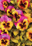 Purple Pansy Prints - Flower - Pansy - Purple and Yellow Pansies Print by Mike Savad