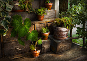Flower Pot Photos - Flower - Plant - A summers soak  by Mike Savad