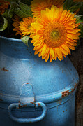 Spring Posters - Flower - Sunflower - Little blue sunshine  Poster by Mike Savad