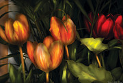 Tulip Bloom Prints - Flower - Tulip -  Orange Irene and Red  Print by Mike Savad