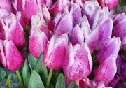 Spring Scenes Acrylic Prints - Flower - Tulip - Pink and Purple Tulips Acrylic Print by Mike Savad