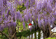 Spring Scenes Acrylic Prints - Flower - Wisteria - A house of my own Acrylic Print by Mike Savad