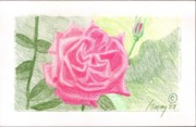 Rose Drawings Prints - Flower 2 - The Confused Rose Print by Rod Ismay