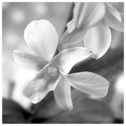 White Digital Art Posters - Flower 2 Poster by Mike McGlothlen