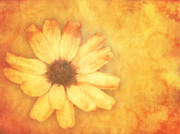 Old Mixed Media - Flower Art by Angela Doelling AD DESIGN Photo and PhotoArt