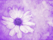 Violett Posters - Flower Art II Poster by Angela Doelling AD DESIGN Photo and PhotoArt