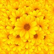 Background Photos - Flower background by Carlos Caetano