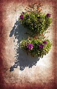 Flower Basket Posters - Flower Baskets Poster by Svetlana Sewell