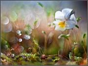 Flower Bell Print by Adrian Krol