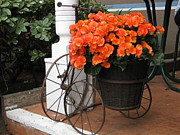Diana Poe - Flower Bike