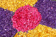 Vibrant Flower Prints - Flower carpet Print by Gaspar Avila