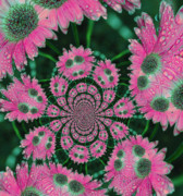 Flower Design Print by Karol  Livote