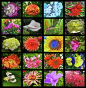 Quilt Photo Posters - Flower Favorites Poster by Gwyn Newcombe