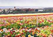 Flower Field Paintings - Flower Fields in Carlsbad 1992 by Mary Helmreich