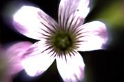 Gary  Taylor - Flower