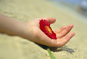 Petals Lifestyle Photos - Flower Held In A Hand by Cristina Pedrazzini