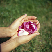 Petals Lifestyle Photos - Flower Held In Hands by Cristina Pedrazzini