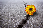 Growing Photo Posters - Flower in asphalt Poster by Carlos Caetano