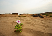 Environment Pyrography Prints - Flower in desert Print by Panya Jampatong