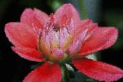 Deborah Benoit - Flower In Stain Glass