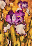 Abstracted Posters - Flower - Iris - Diafragma violeta Poster by Mike Savad