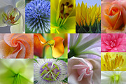Close Up Artwork Posters - Flower Macro Photography Poster by Juergen Roth