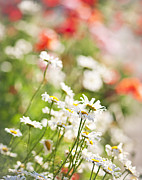 Daisies Flowers Prints - Flower meadow Print by Elena Elisseeva