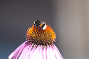 Prakash Pixs - Flower n bee
