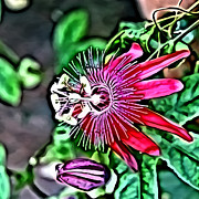 Petal Digital Art - Flower Painting 0001 by Metro DC Photography