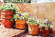 Patio Framed Prints - Flower Pot Steps Framed Print by David Lloyd Glover