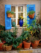 France Doors Posters - Flower Pots Galore Poster by Lainie Wrightson