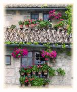 Stone House Photo Framed Prints - Flower Pots In Windows In Arles Framed Print by Carson Ganci