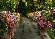 Rainy Day Photos - Flower Road by Svetlana Sewell