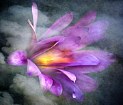 Photos Mixed Media - Flower Spirit by Svetlana Sewell