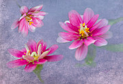 Zinnias Digital Art - Flower Triplets by Betty LaRue