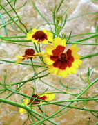 Warm Looking Flower Prints - Flower Web Print by Debra     Vatalaro