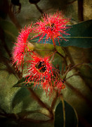 Australian Digital Art - Flowering Gum by Heather Thorning