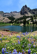 Blanche Framed Prints - Flowering Lake Blanche - Wasatch Mountains Framed Print by Gary Whitton