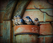 Flowerpot Posters - Flowerpot Swallows Poster by Jai Johnson