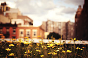 New York City Skyline Art - Flowers - High Line Park - New York City by Vivienne Gucwa