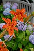 Flowers 263 Print by Joyce StJames