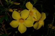 JISS JOSEPH - flowers after rain
