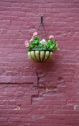 Hanging Pot Framed Prints - Flowers and Brick Wall Framed Print by Frank Romeo
