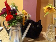 Flowers And Cat Print by Sandahl Parrish