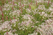 Grasslands Prints - Flowers And Grasses In The Wind Print by Skip Brown
