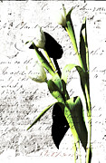Love Letter Mixed Media Prints - Flowers and Love Letters Print by Anahi DeCanio