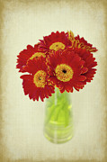 Gerbera Art - Flowers for you by Angela Doelling AD DESIGN Photo and PhotoArt